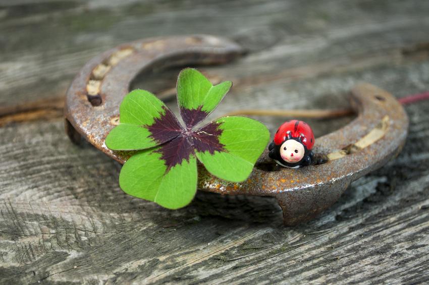 Ferradura, joaninha e trevo de quatro folhas